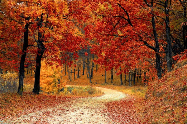 paseo naturaleza otoño
