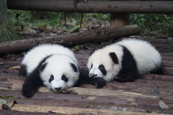 mama cansada ojeras panda