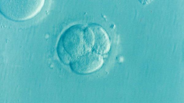 tratamientos de reproducción asistida