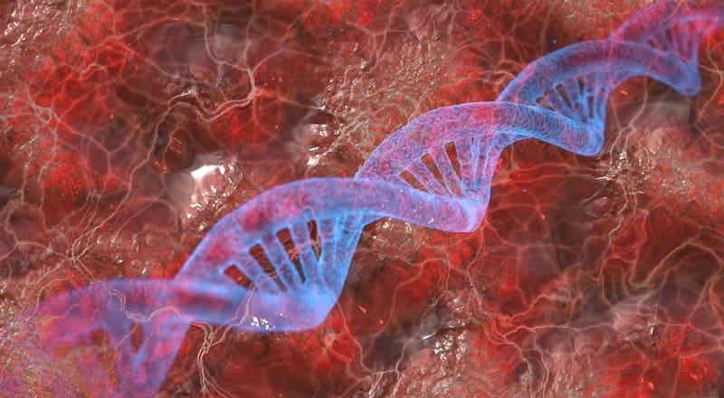 fragmento adn analisis genetico