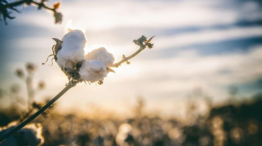 algodon organico ropa primera puesta ventajas