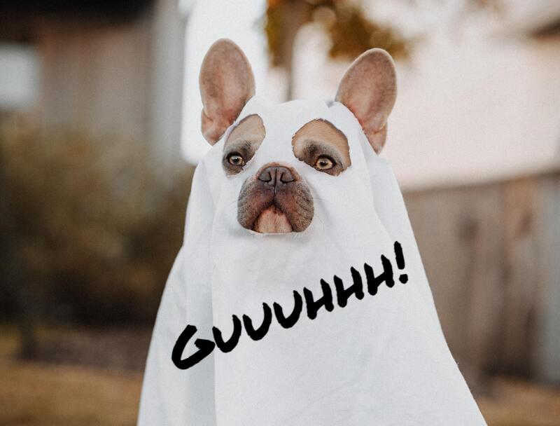perro disfrazado de Halloween dando un susto